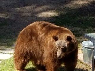 BBQ Bear 2 (1)